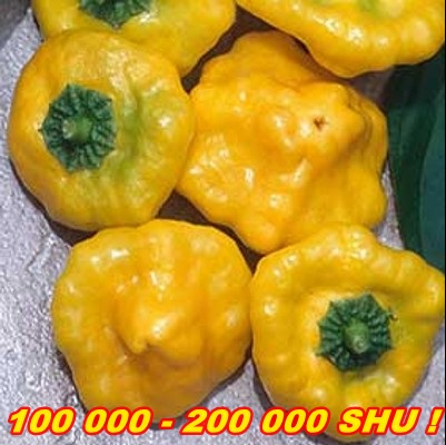 PÁLIVÉ CHILLI PAPRIČKY JAMAICAN HOT YELLOW/10SEMEN /