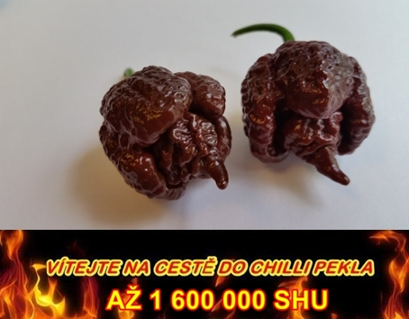 CHILLI PAPRIČKA CAROLINA REAPER CHOCOLATE /5semen/