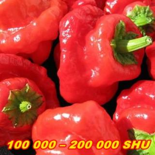 PÁLIVÉ CHILLI PAPRIČKY JAMAICAN HOT RED /10 SEMEN/